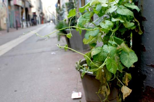 A Marseille, la mairie veut encadrer la végétalisation des rues