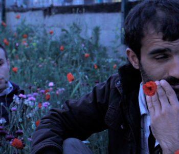 Sessions « Des courts l'après-midi » proposées par Baldanders Films