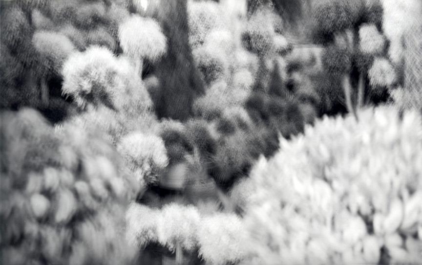 Ariadne Breton-Hourcq – Jardins