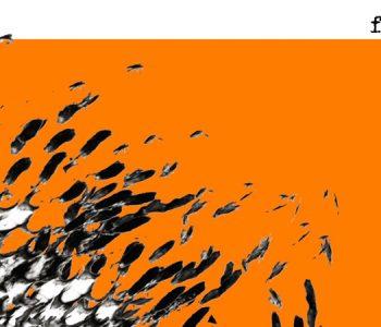 Musiques parallèles pour sentiments perpendiculaires, par Philippe Petit, aventurier sonore